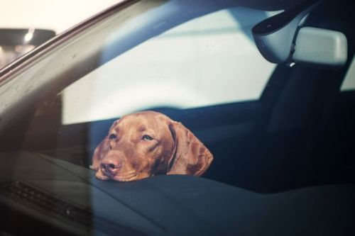 Dogs left in hot cars can die 'in minutes' as urgent plea issued amid heatwave