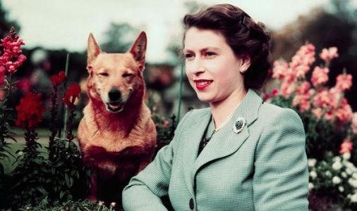Queen Elizabeth II corgis: How many dogs does the Queen own?