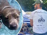 Justin Theroux proves his dog Kuma is the ultimate canine in video showing her learning to swim