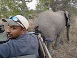 Safari tourists stifle their giggles as elephant scratches its butt on their car