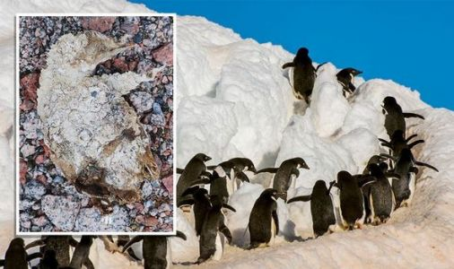 Antarctica mystery: Researchers puzzled by 5,000-year-old 'mummified' penguin cemetery