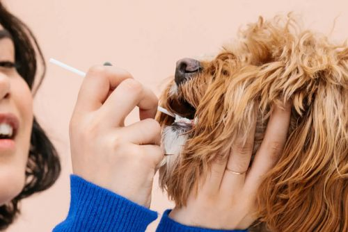 Best dog DNA tests 2020: The top breed and health screening kits for dogs