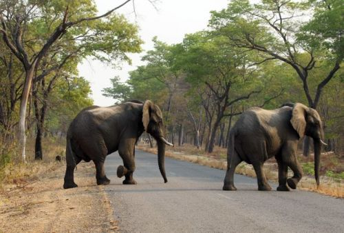 55 Elephants Starved To Death In Zimbabwe Park In Past Two Months