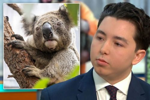 Apprentice star branded 'sick' after suggesting koala fur should be sold for charity
