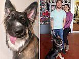 Love at first sight! Wonky-faced dog who was attacked as a puppy finally gets a loving new home