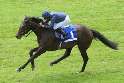 Newsboy's Saturday racing tips for Newmarket, Lingfield and Newcastle