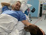 Police officer run over by hijacked police car gets hospital visit from his chocolate lab Diesel