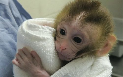 Baby monkey born using frozen tissue of father offers fertility hope to childhood cancer patients