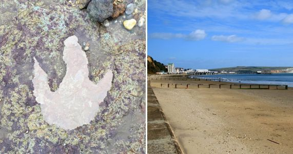 Storm Ciara uncovered evidence of dinosaurs on British beach