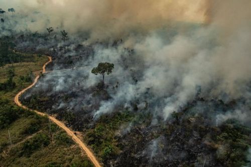 Amazon forest fires to be tackled by Brazilian troops as operation begins