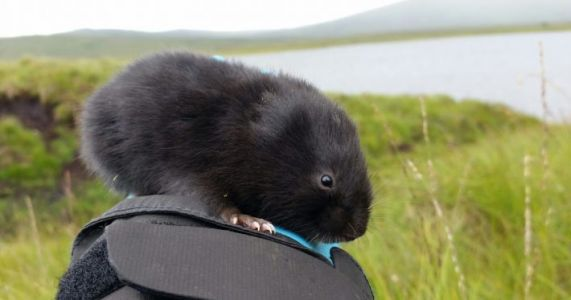 Fishing for Mammals: How DNA from rivers could revolutionise mammal detection on land