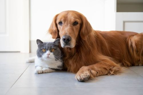 Want To Hire A Pet-Sitting Service? Here's What To Ask Them