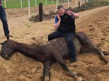 Top figures from the world of racing pose grotesquely on the corpses of thoroughbreds