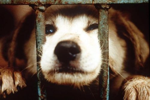 Chinese city bans dog and cat meat trade amid coronavirus outbreak