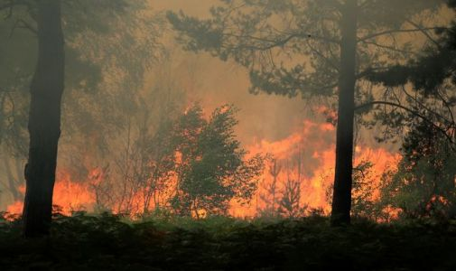 'Major incident' declared as Surrey wildfire forces 120 people to leave homes