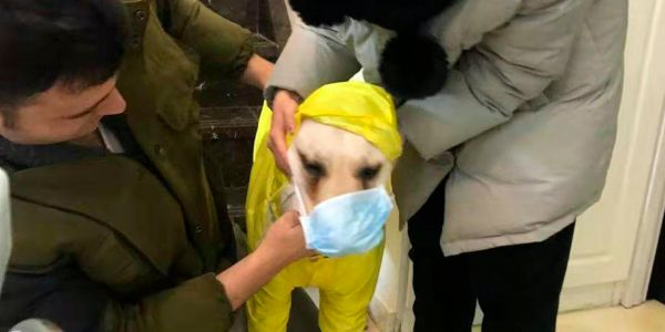 Pet owners are rushing to buy face masks for their pets though it's unclear if our furry friends can get the novel coronavirus