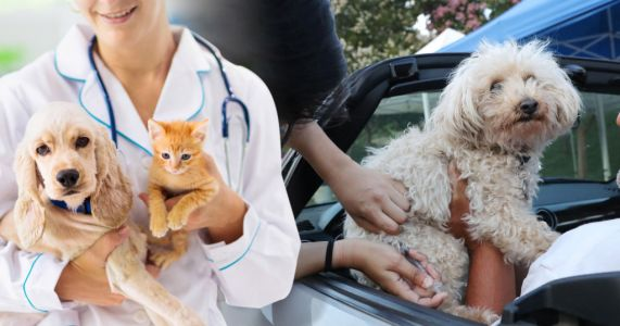 Cats and dogs may have to be vaccinated to stop the spread of Covid