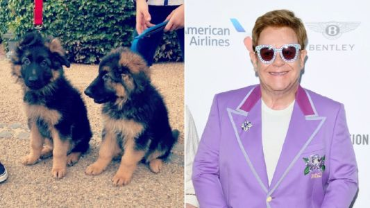 Sir Elton John gets a pair of pandemic puppies as he introduces us to adorable new members of his family