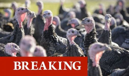 Bird flu outbreak: UK confirms virus at turkey farm in northern England - statement issued