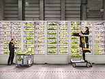 How vertical farming is helping stores reduce their environmental impact