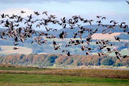 Thousands of birds arrive for winter