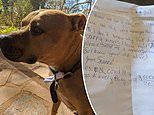 Sarah Jayne daughter Ava and neighbour send notes to check in with each other through DOG Nugget