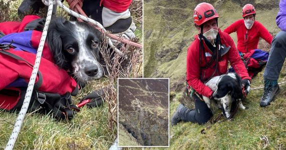 Louis the naughty spaniel survives 300ft plunge down waterfall