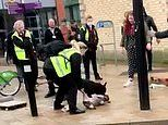 Distressing moment Staffie-type dog mauls pet pug to death on city centre street