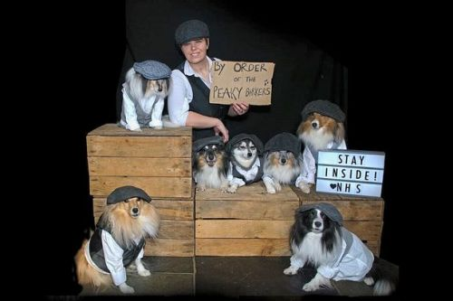 NHS worker dresses dogs in Peaky Blinders outfits to urge people to stay safe