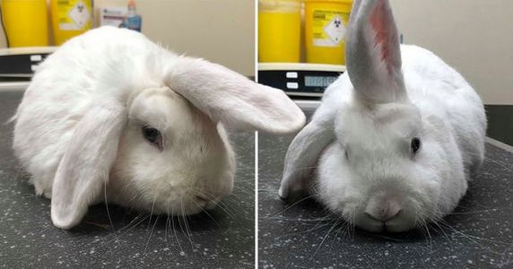 Wonky the rabbit is nicknamed 'unicorn' because of the ear in the middle of his head