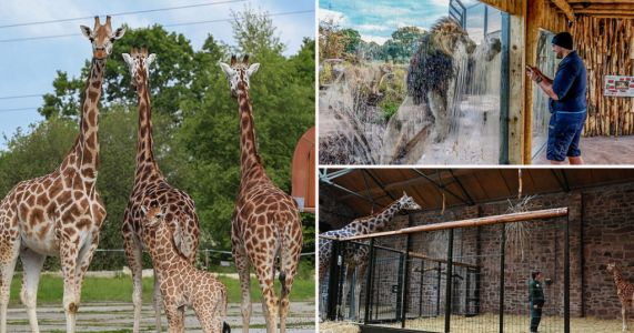 Plea to save Chester Zoo as cost of lockdown threatens permanent closure
