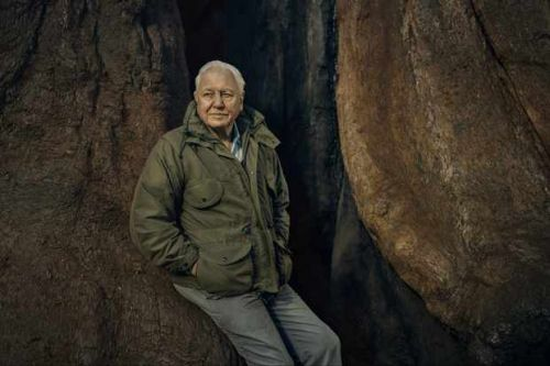 David Attenborough announces new BBC nature series Green Planet