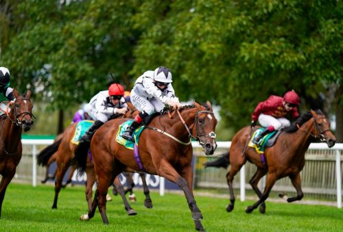 Unbeaten two-year-old Dandalla likely to head to France for Prix Morny following Newmarket victory