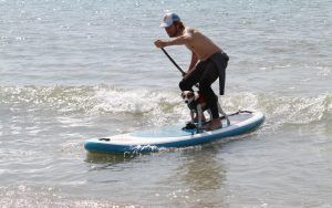Dog surfing and paddleboard championships this weekend