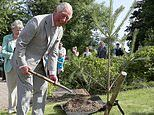 Prince Charles has advised the Government on how to save Britain's forests, documents reveal