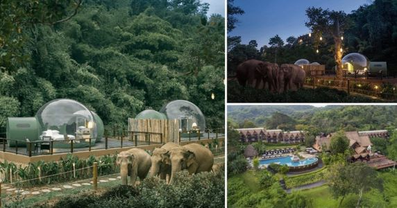 Sleep next to elephants and watch the night sky in these bubble pods in Thailand