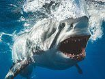Jaw-dropping photos taken by 'crazy' shark photographer