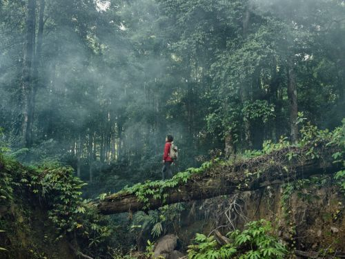 World Mental Health Day: 'Nature prescriptions' can improve people's mental health