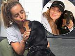 Louise Redknapp shares a touching tribute to her beloved rescue dog Corky after he passed away