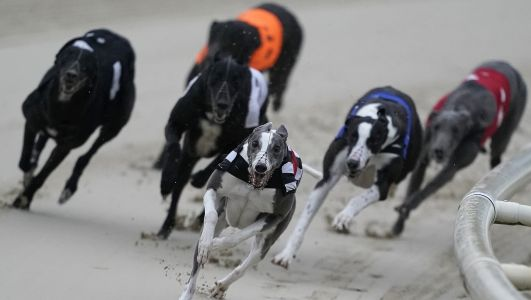 Greyhound Derby Tips: All the best bets from tonight's Semi-finals