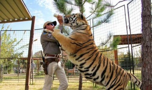 Tiger King: Can captive tigers be released into wild?