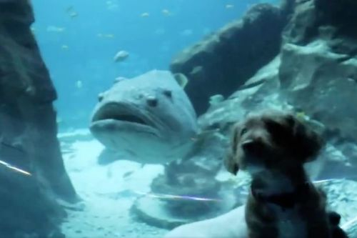 Puppies treated to 'best day ever' at deserted aquarium with humans on lockdown