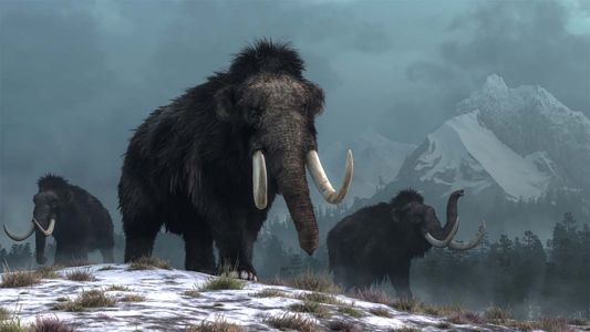 Climate change drove woolly mammoth extinct, not humans
