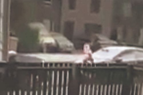 Man spotted skidding down Dundee street in his pants and balaclava