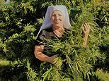 Bad habit! Meet the Californian NUNS who rake in £1.1million a year selling cannabis oil