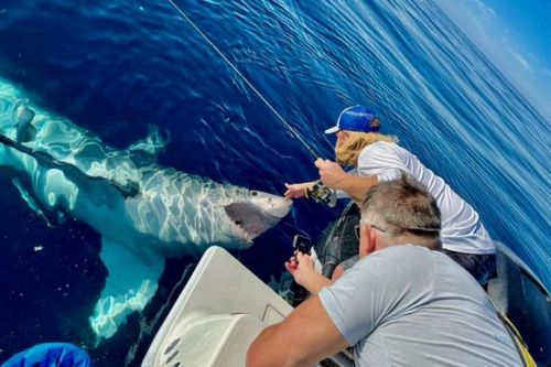 Breathtaking video shows fisherman stroking 16ft shark before it snaps at boat