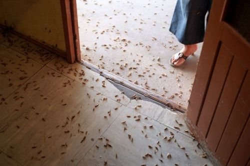 Egypt about to be hit by a 'biblical' plague of locusts