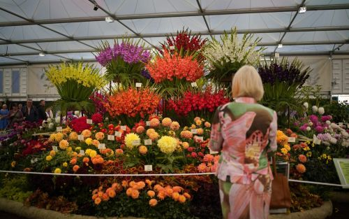 Chelsea Flower Show 2021: the award winners and best gardens revealed