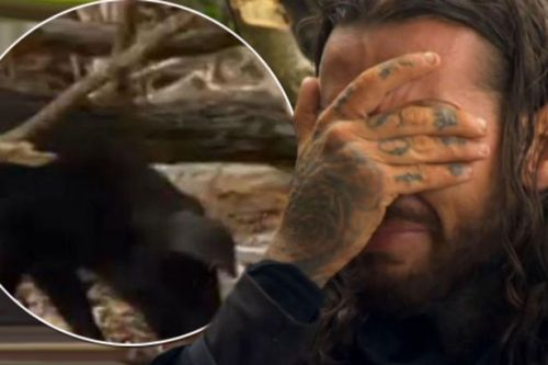 Celebrity Island slammed as pig chokes itself to death after Pete Wicks refuses to slaughter it