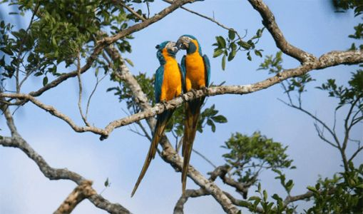 Conservation action has reduced bird extinction rates by 40%